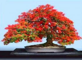 Tips Cara Menyuburkan Pokok dan Tanaman Dari Emak | Nak Tengok Halaman Rumahku
